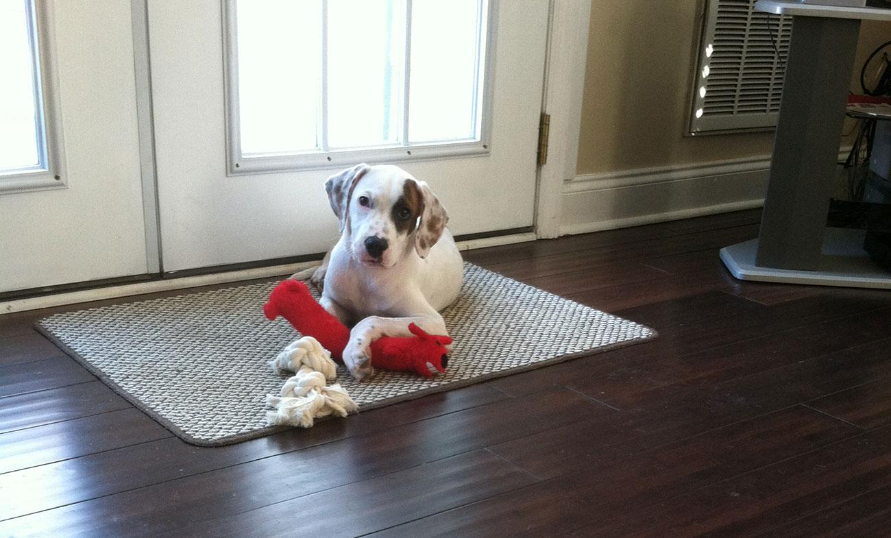 Meet Kseniya and Brandon Martin's dog, Theo