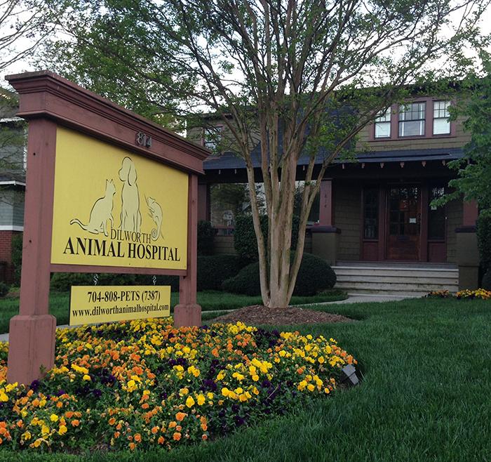 animal-hospital-dilworth