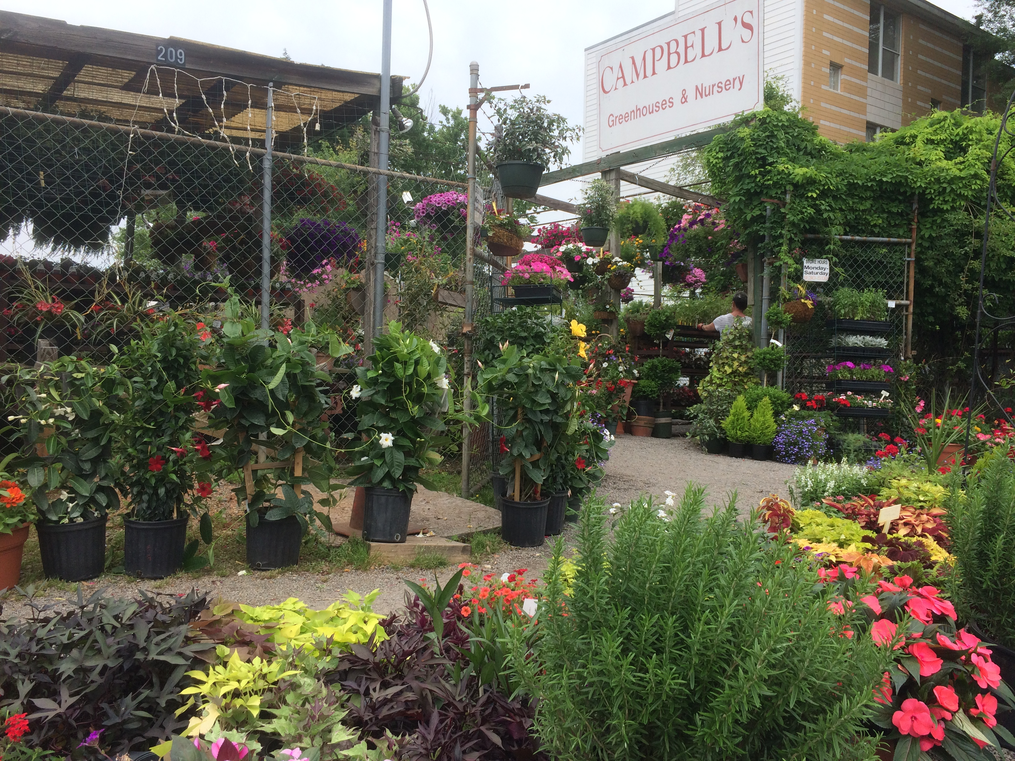 Campbell 39 S Greenhouse Will Bring Your Orchid Back To Life