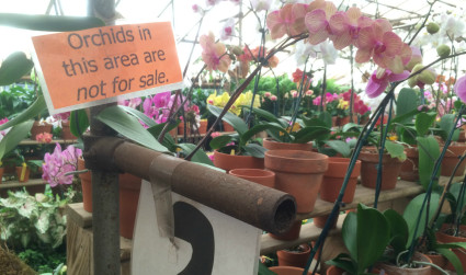 Campbell's Greenhouse will bring your orchid back to life for $14 max and up to one year of recovery