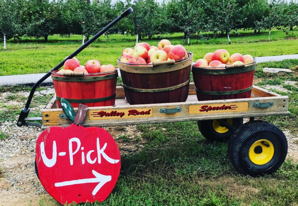 Apple season is upon us: Pick-your-own orchards within 2 hours of Charlotte