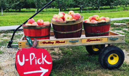 Apple season is upon us: Pick-your-own orchards within 2 hours of...