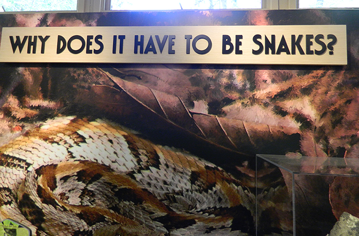 why-does-it-have-to-be-snakes