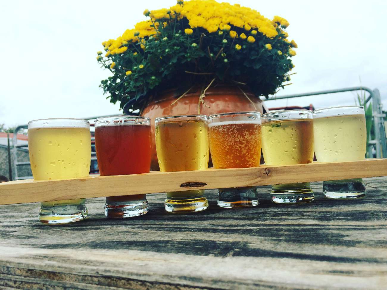 Windy Hill Orchard: Yes to hard cider and doughnuts, no to apples