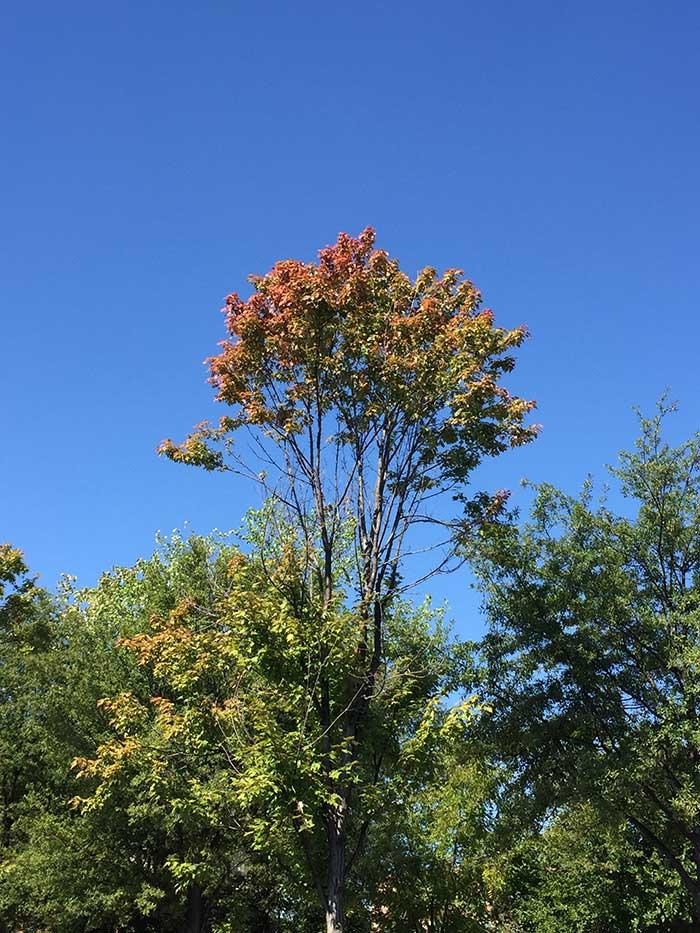 charlotte-fall-color