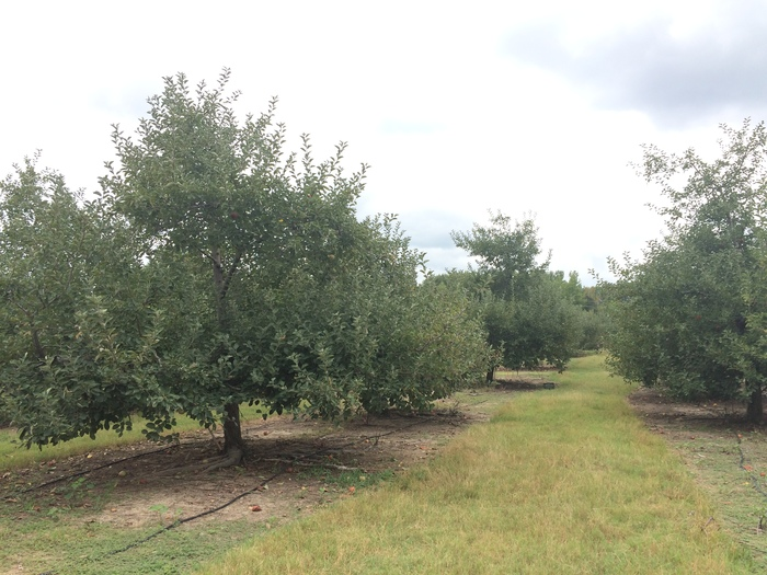 Windy Hill Orchard