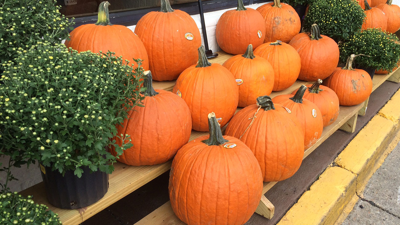 Feed your pumpkin addiction in Charlotte this fall