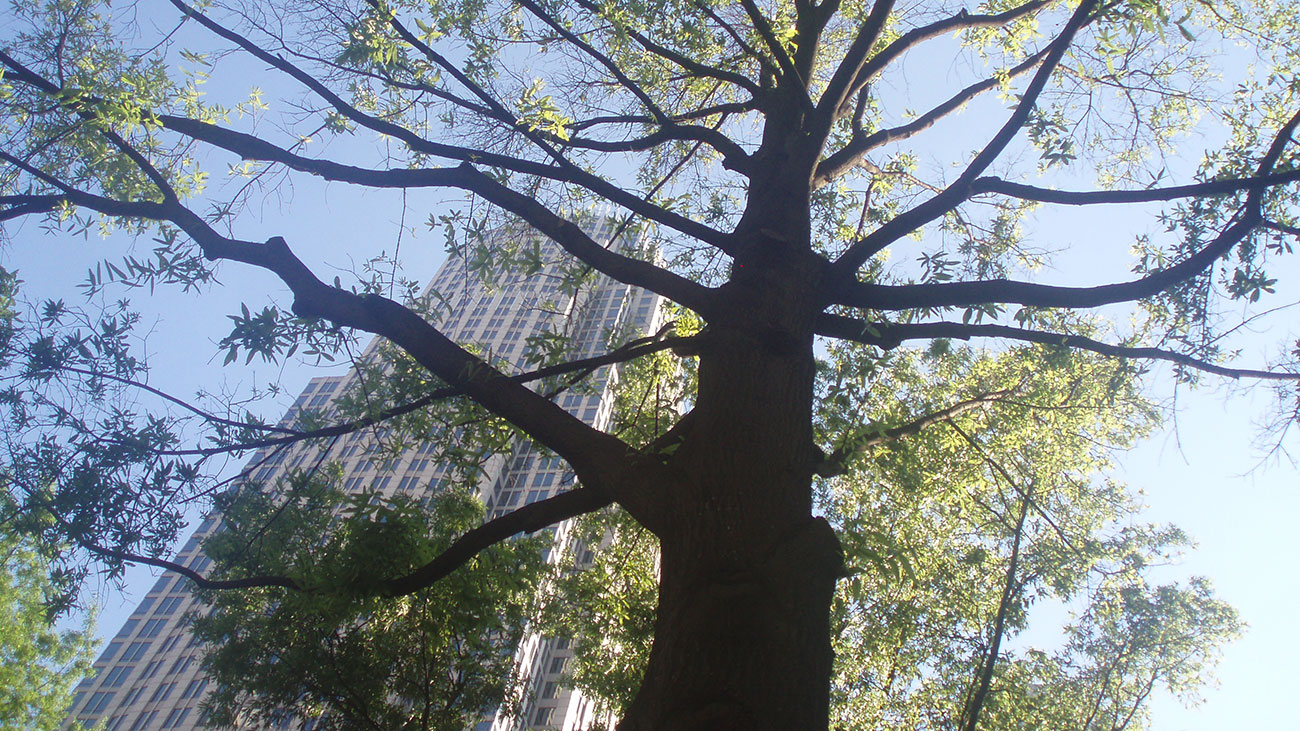 12 reasons why Charlotte is a great tree city