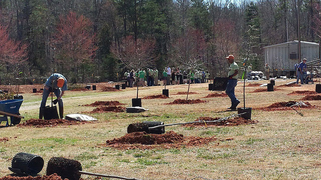 planting trees in charlotte