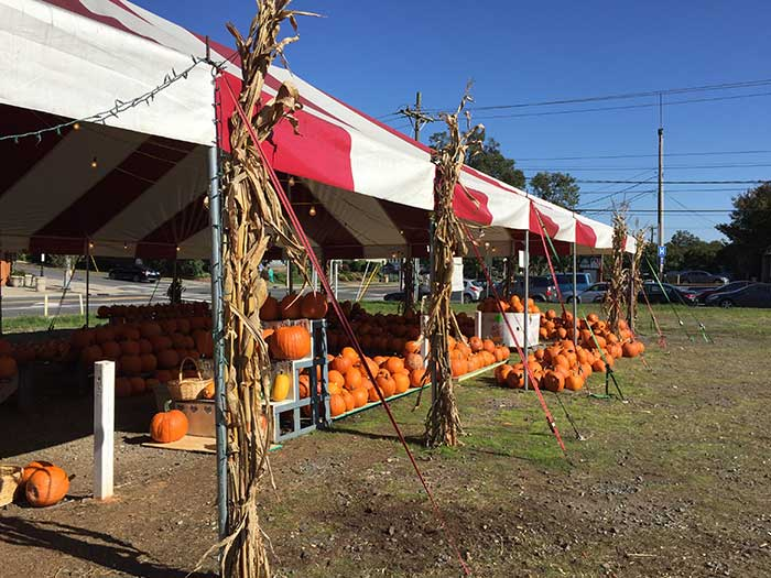 pumpkin-patch-east