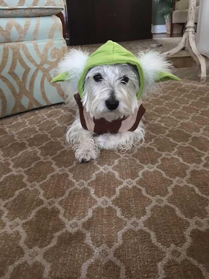 reading-buddy-Yoda