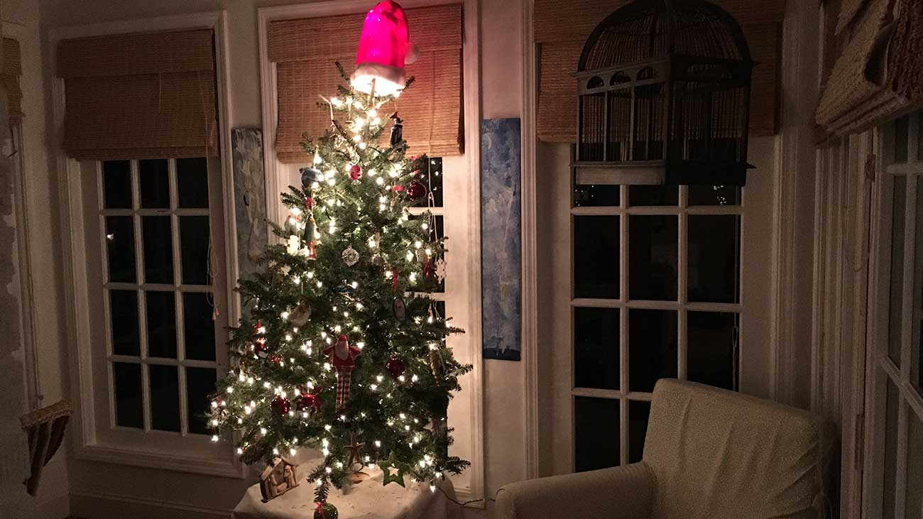 Christmas Tree In Charlotte House