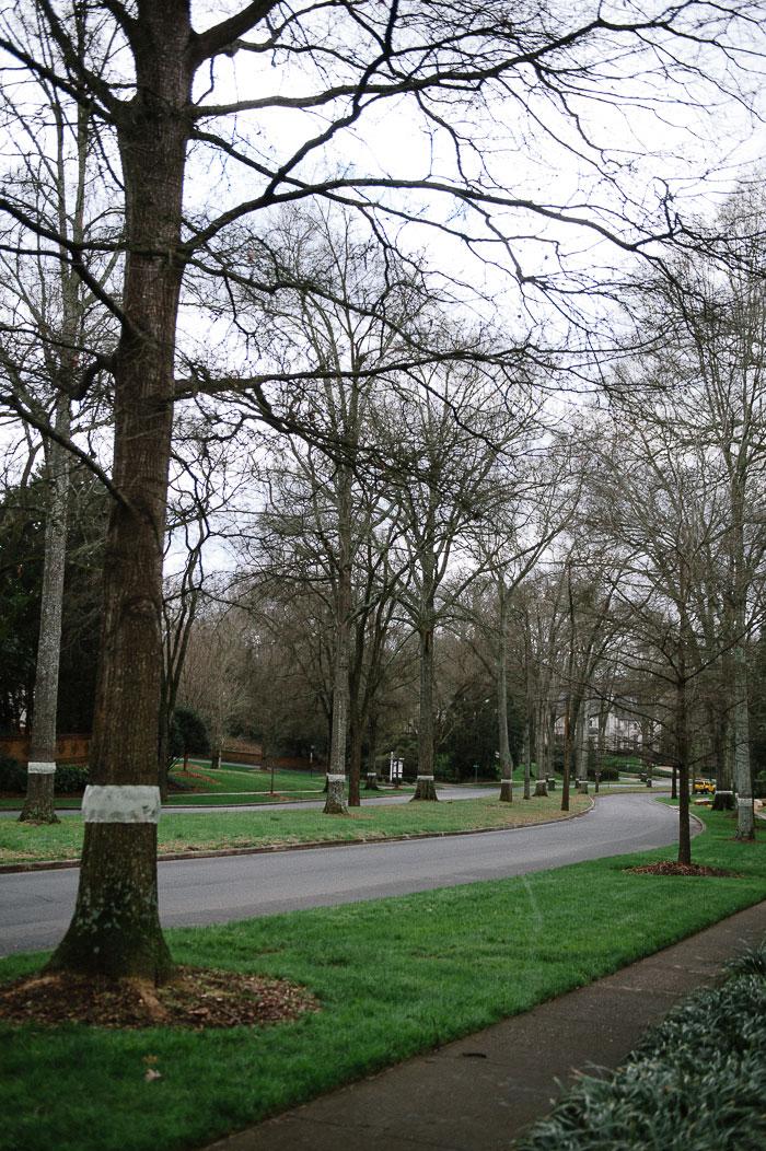 Queens Road West median