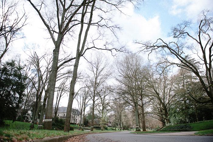 Queens Road West Trees