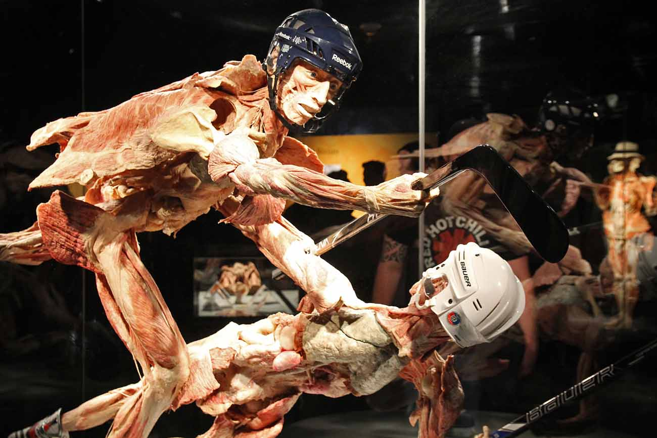 Experience Body Worlds Amp The Cycle Of Life In The Final