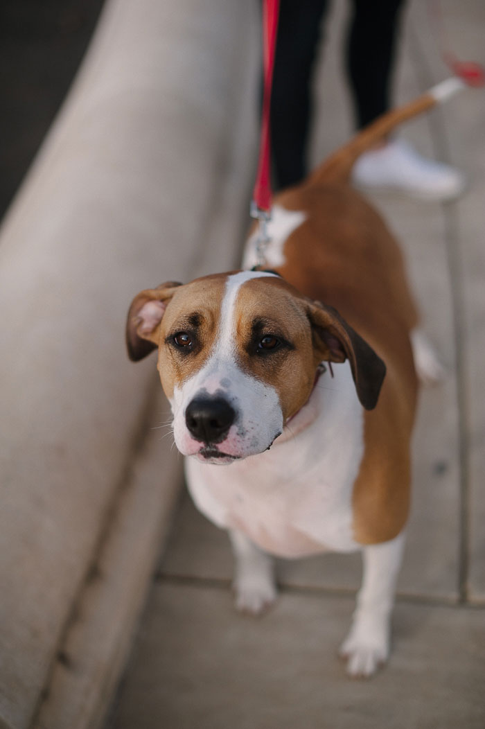 brown-and-white-dog