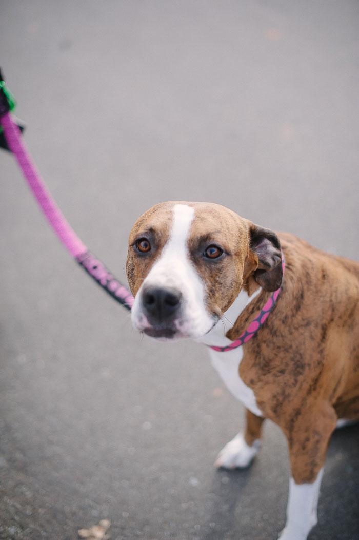 dog-with-pink-polka-dog-leash