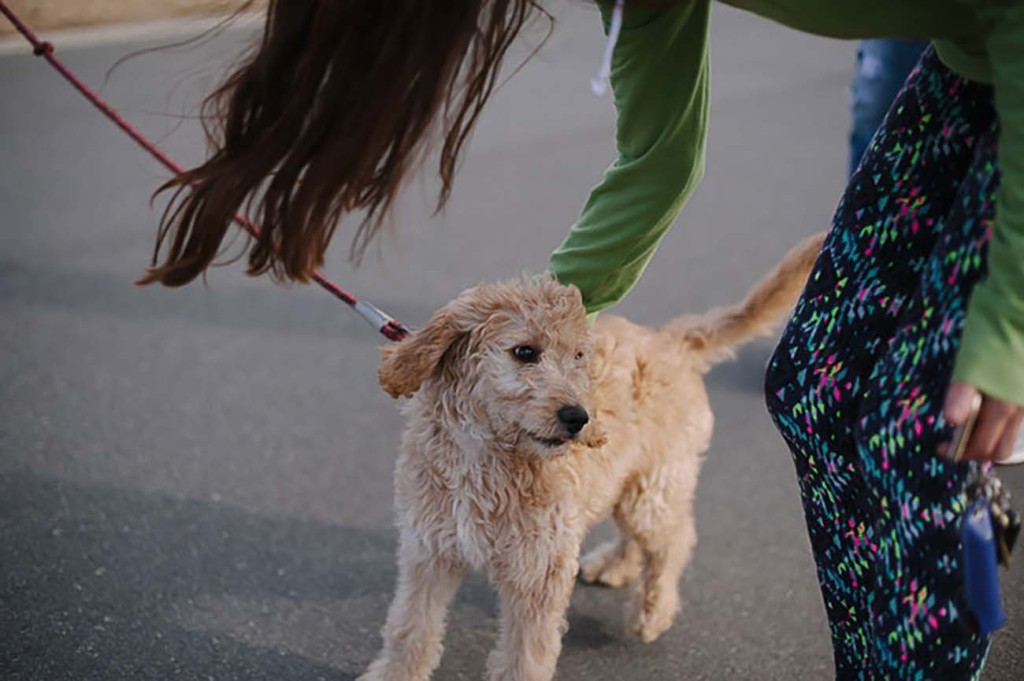 12 unexpected places you can bring your dog in Charlotte