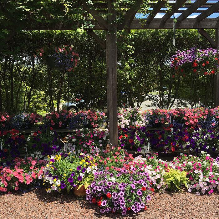 Daniel-Stowe-flowers