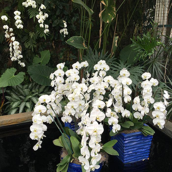 daniel-stowe-orchids