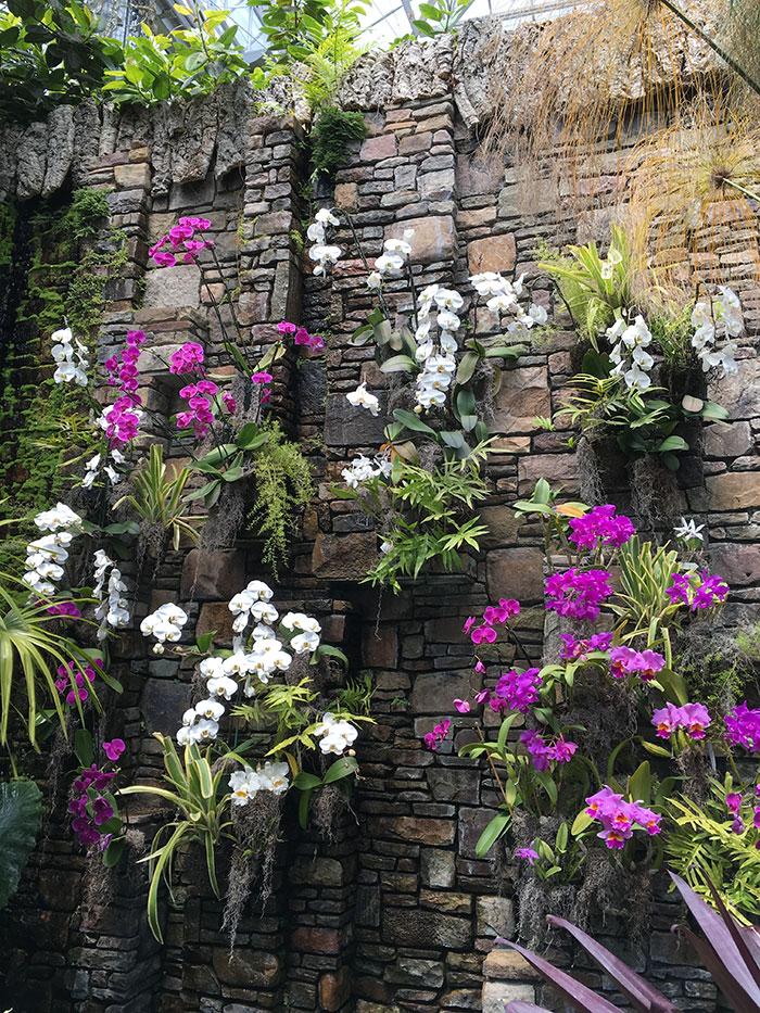 Daniel Stowe Orchid House