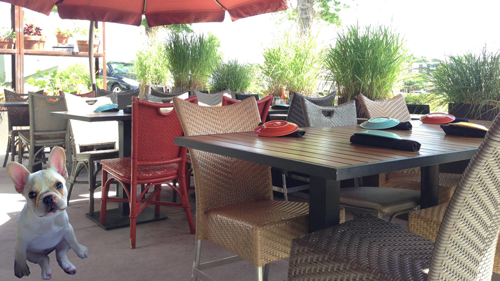 The 10 best restaurant patios for people with pups
