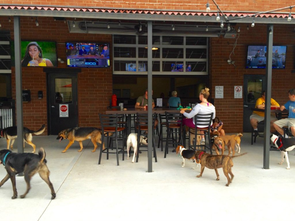 6 dog-friendly drinking spots in Charlotte and their daily specials