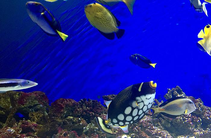 fishtankdiscoveryplace