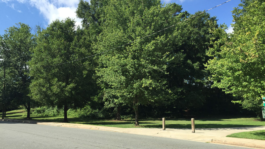 Op-Ed: Hey CMS, please don't sell Sedgefield's green space for quick cash