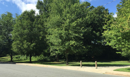 Op-Ed: Hey CMS, please don't sell Sedgefield's green space for quick...