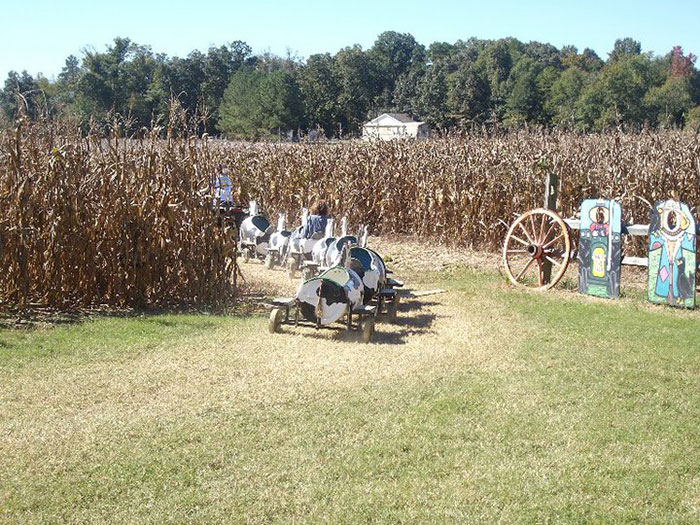 country-days-corn-maze