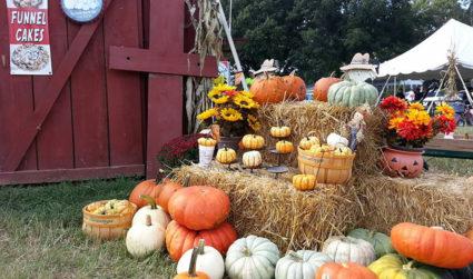 13 pumpkin patches to visit in the Charlotte area this fall