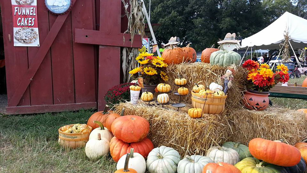 Quick guide to 13 must-visit pumpkin patches near Charlotte