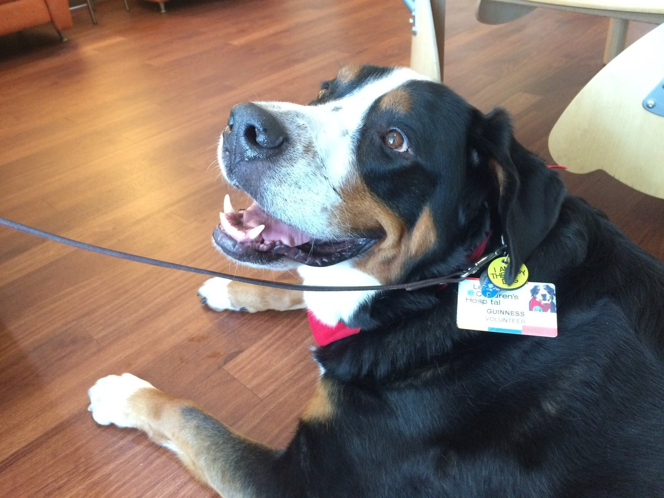 Follow guinness a certified therapy dog on a visit to levine follow guinness a certified therapy dog on a visit to levine childrens hospital 1betcityfo Image collections