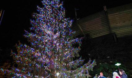 Panthers Tree Lighting