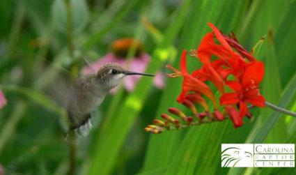 Backyard Habitat Expo: What's living in your backyard?