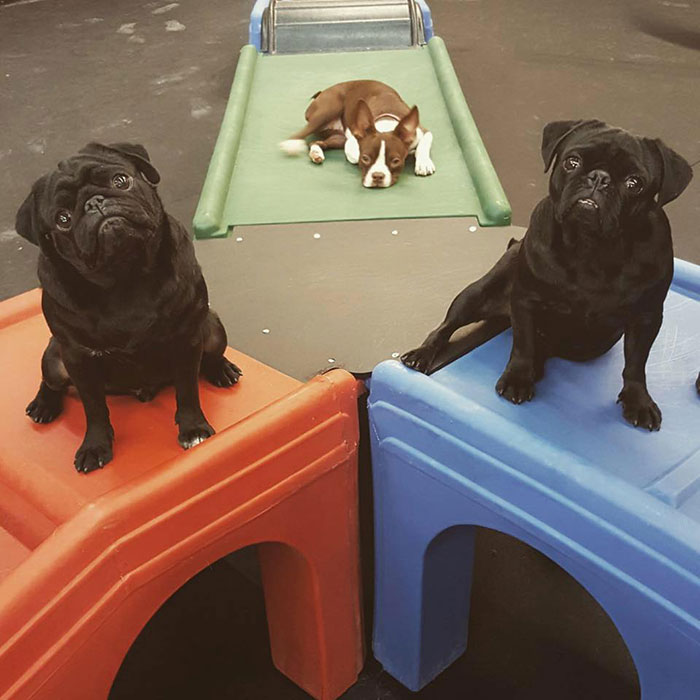 lucky dog day care