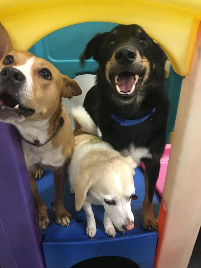 dogtopia-dogs