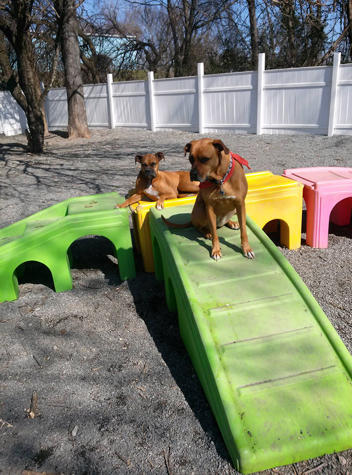 noda-bark-and-brew-dogs