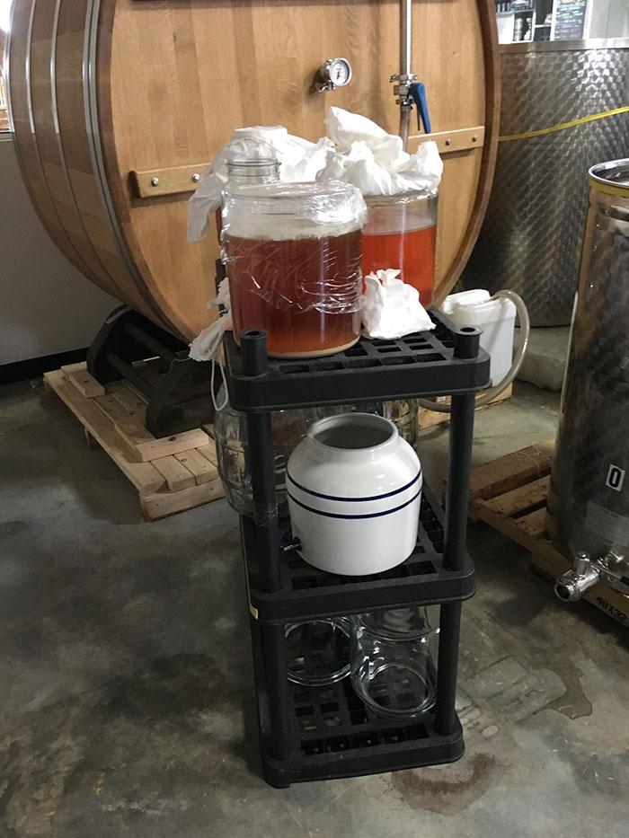 brewing kombucha lenny boy