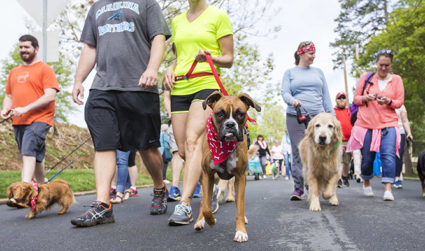 Pet Palooza Festival & Walk for the Animals