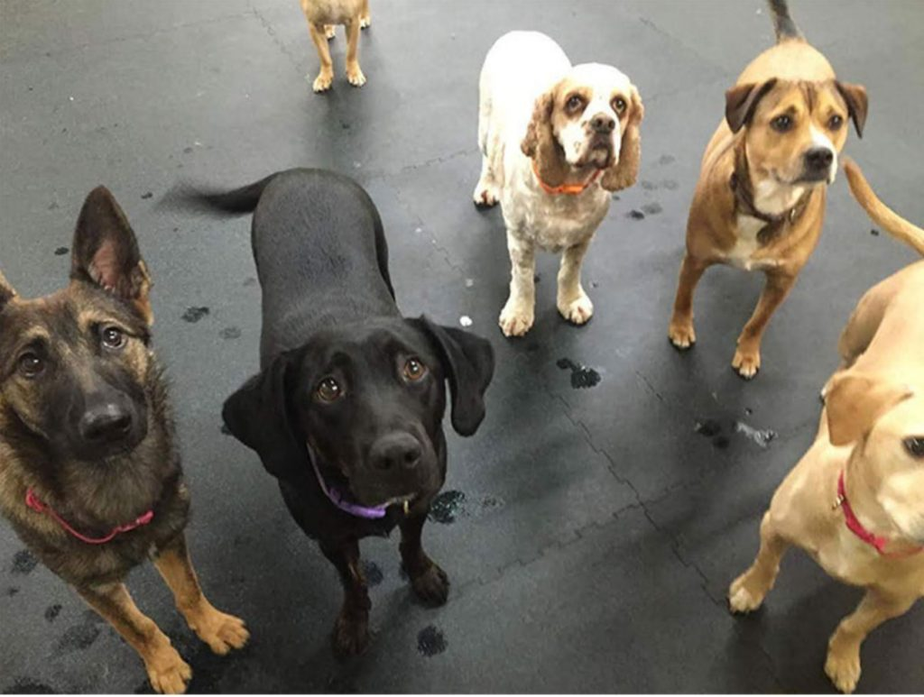Five Rings Dog Daycare