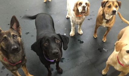 Confessions of Charlotte's doggy daycare workers