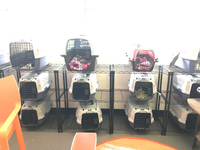 Cmpd Animal Care Control Officially Opened Its New Kitten Nursery Yesterday
