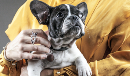 Win a Dog Fever piece from Windsor Jewelers – because who...