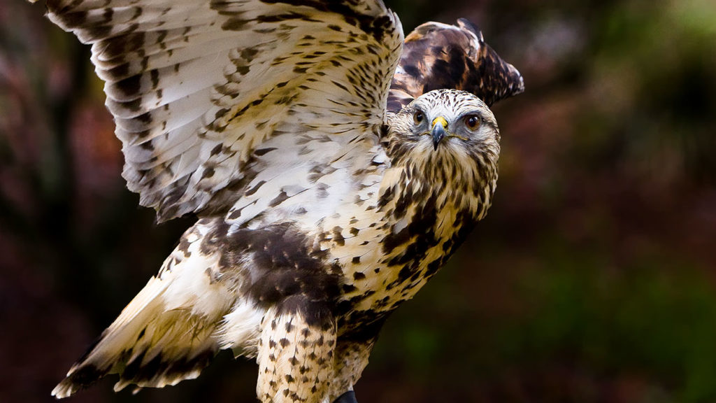 How to experience the Carolina Raptor Center when birds kind of freak you out