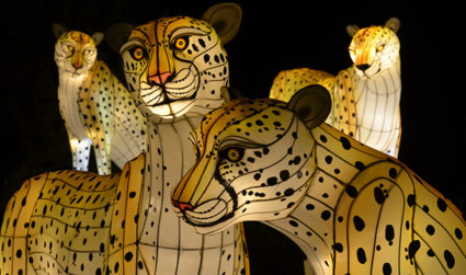 Don't miss the Chinese Lantern Festival at Daniel Stowe Botanical Gardens on display Wed-Sun now through 10/29