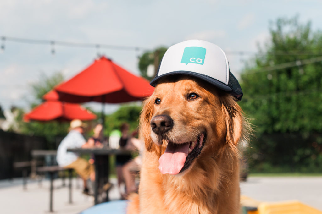 Mark the calendar and grab the leash: 3 must-do dog-centered events in September