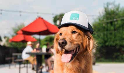 The Agenda guide to dog ownership in Charlotte