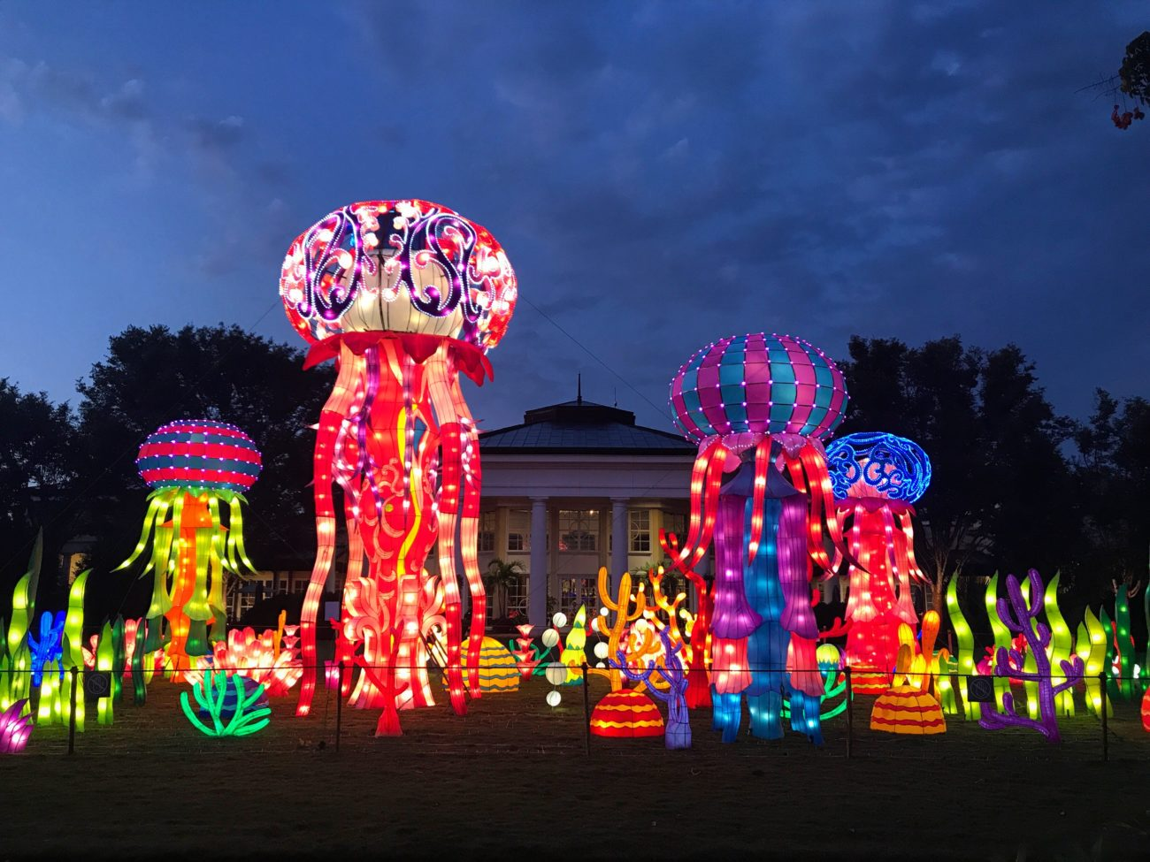 the chinese lantern festival is now open at daniel stowe botanical